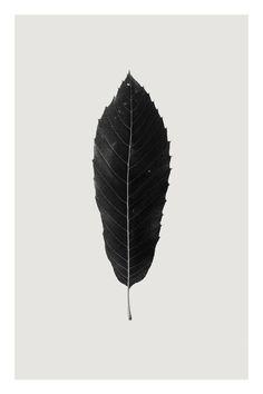 """Saatchi Art Artist Anders Bundgaard; Photography, """"Sweet Chestnut"""""""