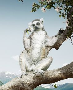 Photography by Simen Johan #inspiration #photography #animals