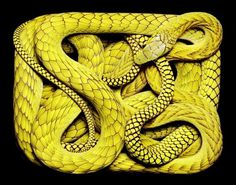 Colossal | An art and design blog. #snake