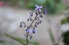 Purple Flower, Ella Clark, taken on 1st of September 2017, http://suitcasedreaming.tumblr.com