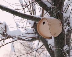 Bird House by SmithMatthias