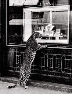 Cartier leopard #leopard #cartier
