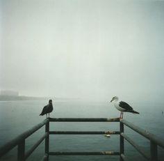 Feaverish Photography § Oceanside