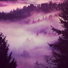 426506_10150583807979872_507164871_8611969_559125230_n.jpg (612×612) #fog #trees #instagram