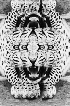Biter #teeth #leopard #white #eyes #reflection