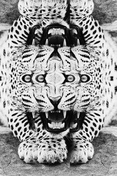 Biter #teeth #leopard #white #eyes #reflection