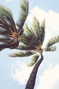 T H R T B R K R S #photography #summer #holidays #palm trees