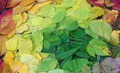 Picture+29.png 632×390 pixels #leaves