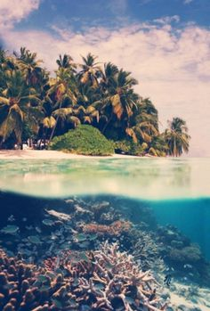 Category: Talents » Jonas Eriksson #ocean #photography #tropical