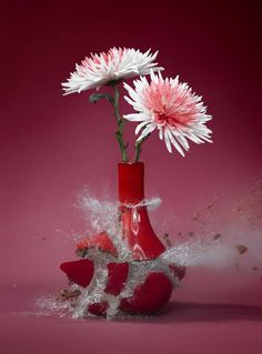 Flowervases by Martin Klimas #speed #photography #inspiration #high