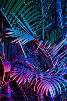 Cru Camara   PICDIT #plant #palm #botany #leaf #foliage
