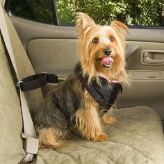 Pet Vehicle Safety Harness #tech #flow #gadget #gift #ideas #cool