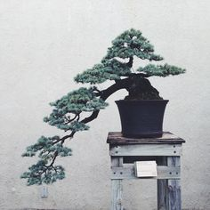 bonsai #interior #design #decoration