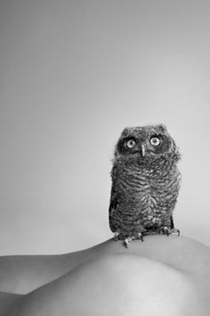 Ryan McGinley #mcginley #photography #ryan #owl