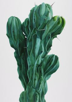 Cactus paintings – Kwang-Ho Lee #cactus #flora
