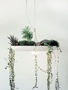 babylonlightfixture.jpg (818×1091) #succulents #hanging #light #plants