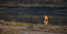 Wildlife Photography by Gregoire Bouguereau #nature #wildlife #photography #animals