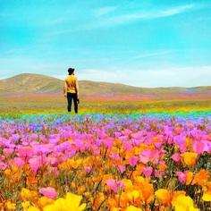 Ramzy Masri Turns The World Into a Rainbow Paradise 6 Ramzy Masri Turns The World Into a Rainbow Paradise