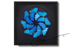 #BLK Morpho Ecliptic by Crawlers
