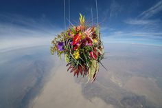 A Japanese Artist Launches Plants Into Space #clouds #space #flowers