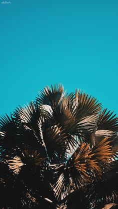 Blue sky, tree, sky and green HD photo by Oliver Cole (@o_j_cole) on Unsplash