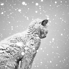 Cat #beauty #white #cold #snow #black #cat #photography #and #animal #winter