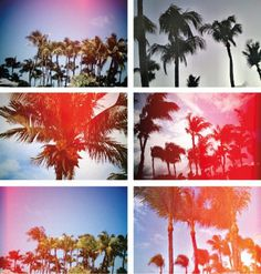 http://www.blondegotblues.com/ #inspiration #palm #graphic #photography #leaky #trees