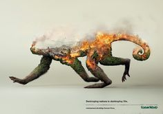 wildlife, rainforest, activist, activism, monkey, doubleexposure, exposure, photography, fire, smoke