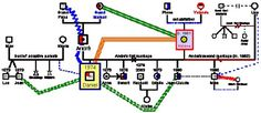 The Genogram - GenoPro #information #genogram #chart
