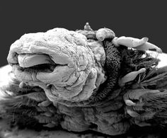 If only you could see what I have seen with your eyes - but does it float #microscopic #photography