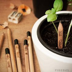 Sprout Pencil #gadget
