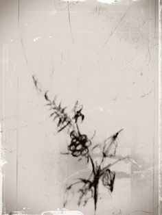 fade in #flowers