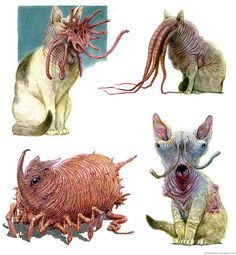 Extraterrestrial Cats by Peter Boehme