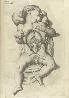 Plates from Spiegel's De formato foetu liber singularis (1626) | The Public Domain Review #cary #babies