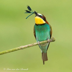 #eye_spy_birds: Brilliant Birds Photography by Tom van den Brandt