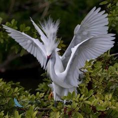 Birds of Florida: Fabulous Bird Photography by Andrea Pico Estrada