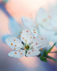 #flora_addict: Magical Flowers Photography by Eileen Hafke