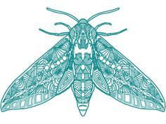 Cold_moth #moth #drawing #illustration