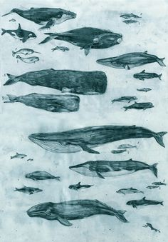 Whales #whales