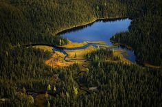 Naturwunder Erde - Wildlife Project by Markus Mauthe for Greenpeace #wildlife #photography #nature