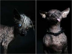 Ugly Dogs by Ramin Rahimian