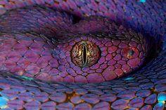 DeadFix · #viper