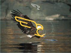 Falcon by Sahirul Iman