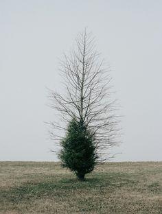ne m'oubliez pas #dead #tree #green