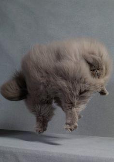 MOONMUD #fluffy #fly #cat