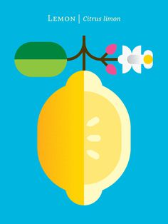 Graphic Fruit Posters by Christopher Dina #flat #design #graphic #fruits #colorful #poster