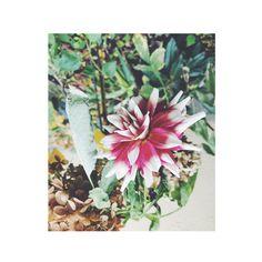 #flowers PHOTOGRAPHIE © [ catrin mackowski ]