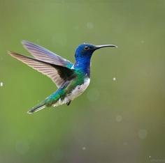 #bestbirdshots: Colorful Birds of Colombia by Luis Fernando Agudelo