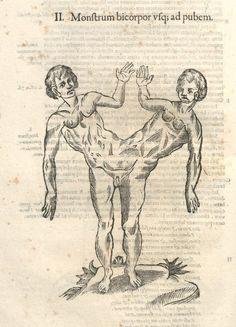 000640 #naturalism #aldrovandi #illustration #latin #ulisse #monster #drawing