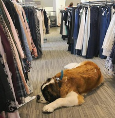 Most Dog Friendly Stores in America - Nordstrom